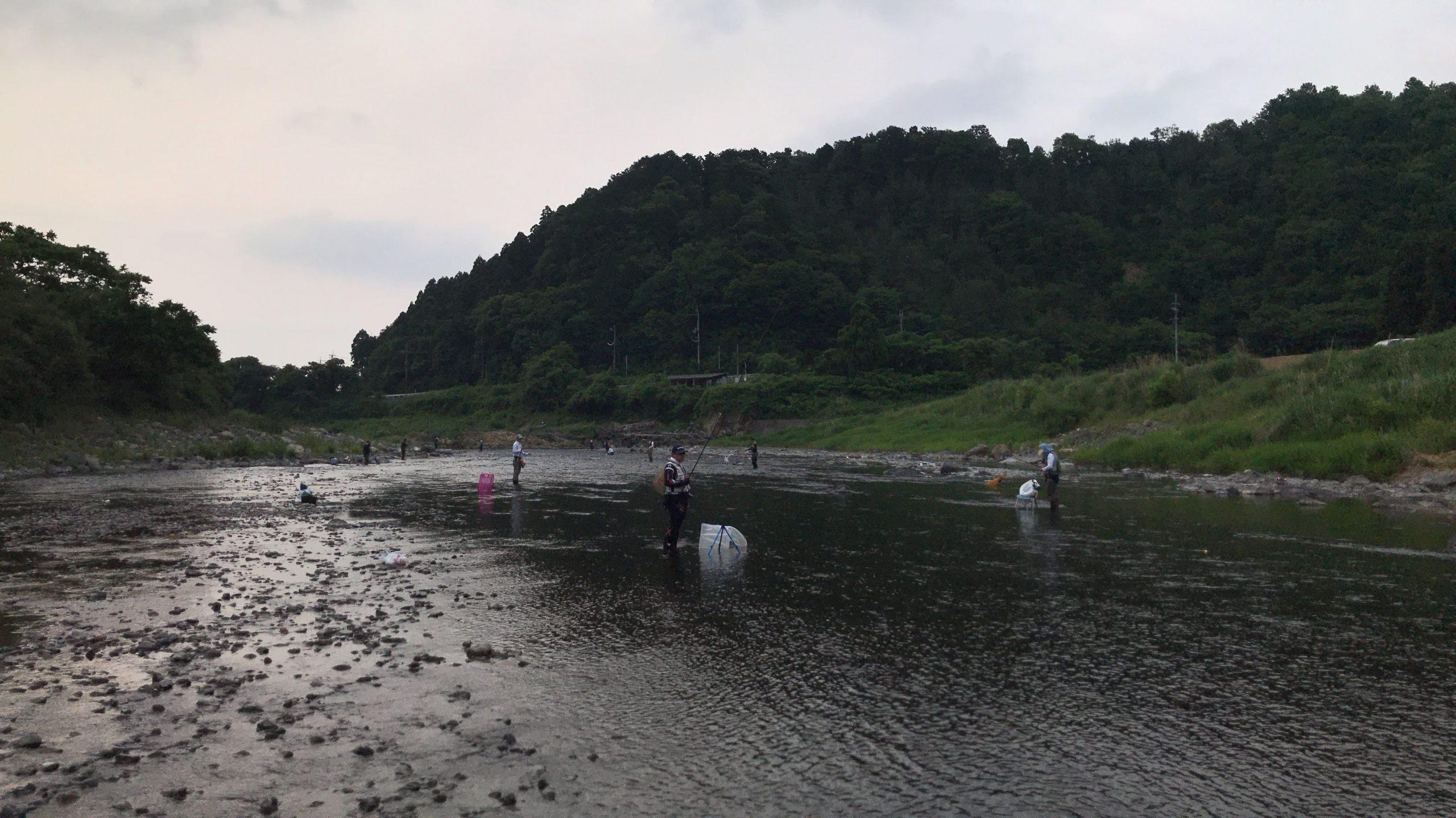 安曇川 鮎 釣り